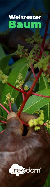 Weltretter Baum - treedom