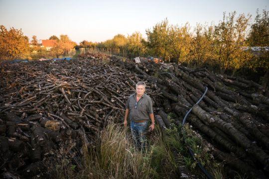 Biobauer Johannes Blohm inmitten der Reste seiner gefällten Kirschbäume.