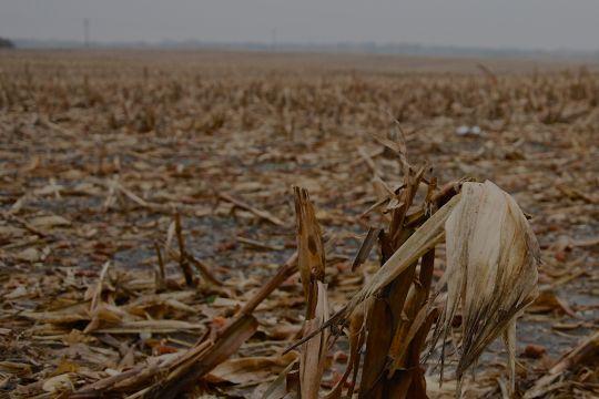 Milliardengeschenke an die Braunkohle – klimareporter°